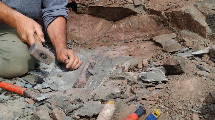 10 metrelik dev dinozor fosili bulundu