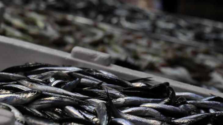 Balıkçılar palamuttan sonra hamsiden umutlu