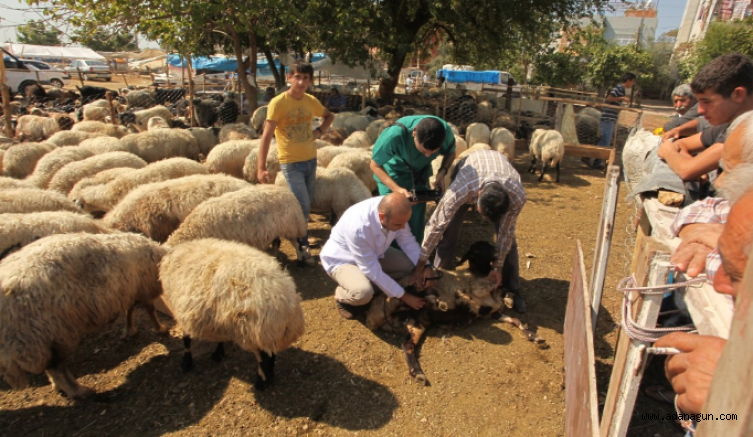 Seyhan'da kurban satış yerleri belirlendi